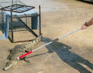 Animal Handling Animal Traps Amp Supplies